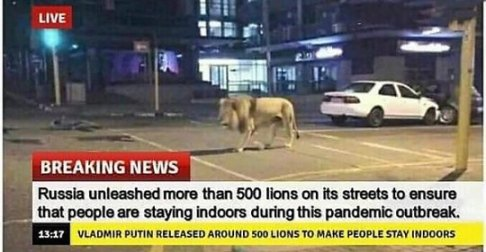 Lions In Russia
